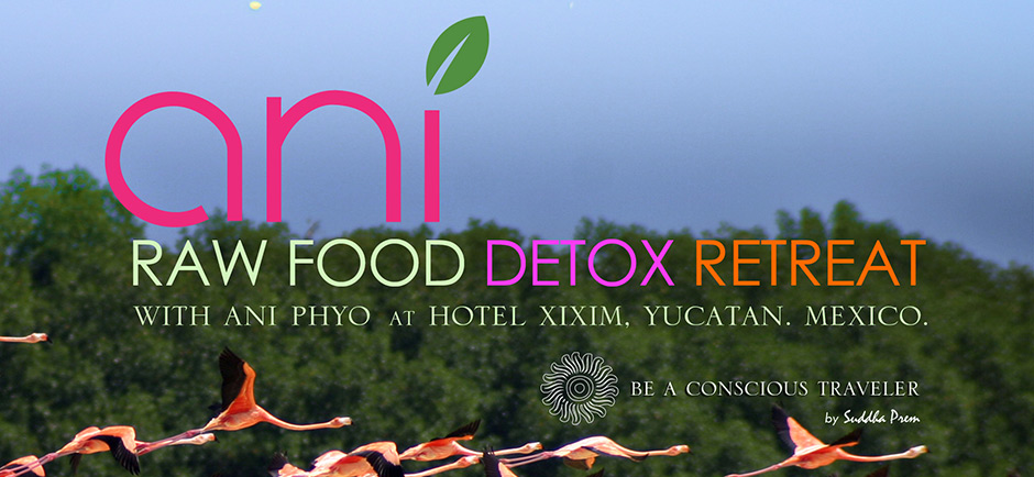 ANI-RAW-FOOD-CARD_v2_slider